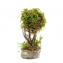 Tree with moss for nativity scene 10 cm