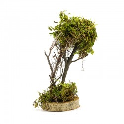 Tree with moss for DIY nativity scenes 15 cm