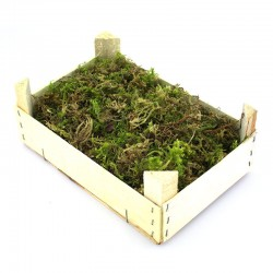 Wooden box with soft moss 320 g
