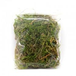 Moss for nativity scene 20 g pack