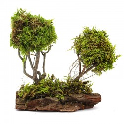 Trees with cortex for nativity scene 17x19 cm