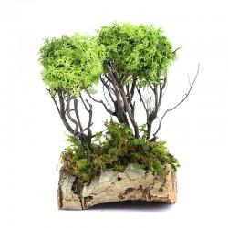 Lichen trees with cork  12x20 cm