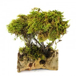 Tree with moss on cork 13x20 cm