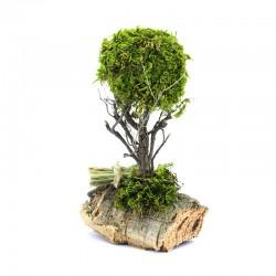Tree with brushwood on cork for nativity scene 20 cm