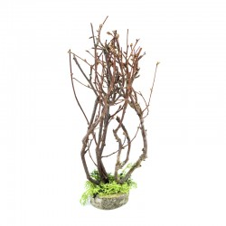 Trees with dried branches for nativity scene 22 cm