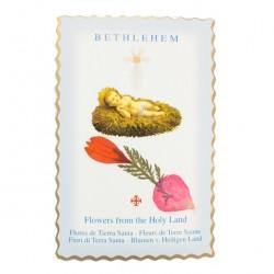 Image Bethlehem Child with Flower 6.5x10 cm