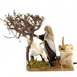 Uomo raccoglie olive terracotta vestito a movimento 12 cm